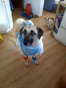 Rocky (jetzt Olaf)