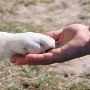 Tiere anderer Organisationen