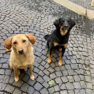 Bulut und Nadia
