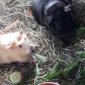 BumBum und Elvis